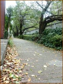 20160903  桜の葉  1  秋の気配