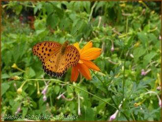 20160929  蝶々  1   下落合東公園