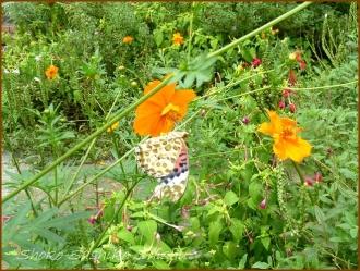 20160929  蝶々  4   下落合東公園
