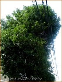 20161005  木 A 1   秋の香り