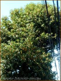 20161005  木 A 2   秋の香り