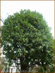 20161005  木 B 1   秋の香り