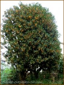 20161005  木 B 2   秋の香り