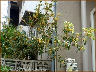 20161005  木 C 4   秋の香り