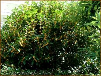 20161005  木 C 5   秋の香り