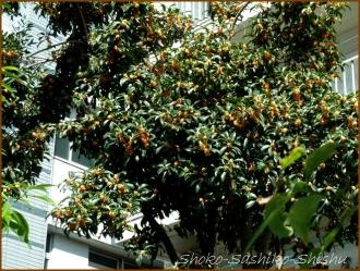20161005  木 C 6   秋の香り