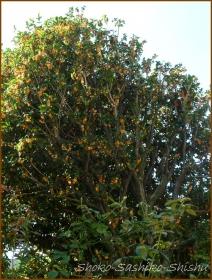 20161005  木 C 7   秋の香り
