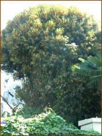 20161005  木 C 8   秋の香り