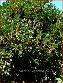 20161005  木 C 10   秋の香り
