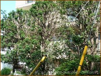 20161005  木 C 11   秋の香り