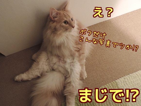 sato3296.jpg