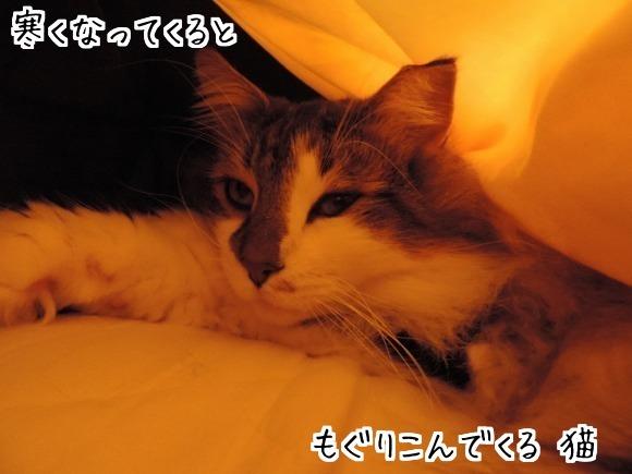 sato3359.jpg