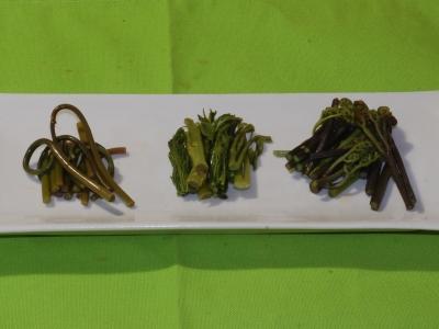 山菜3種のだし醤油漬け