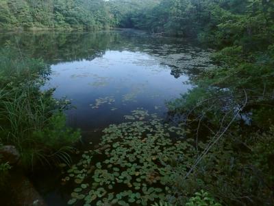 谷津奥の溜池