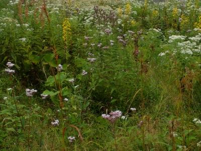 撹乱地にある湿地