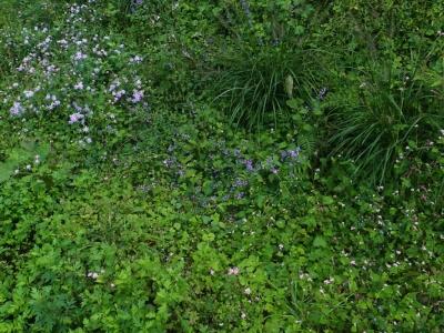 秋の山野の花々