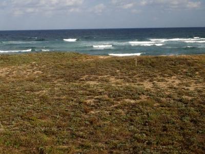 海岸に広がる砂丘