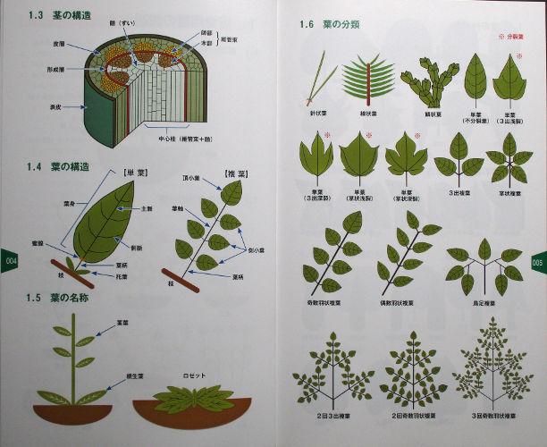 植物用語1