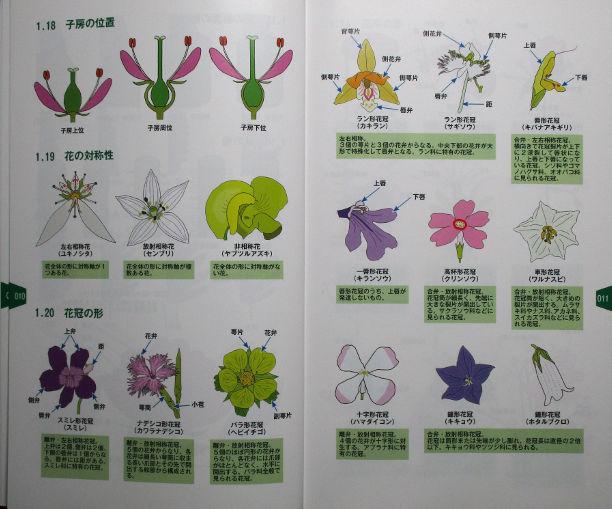 植物用語2
