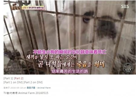 韓国子犬製造工場002