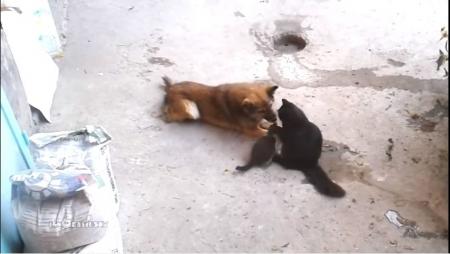 親友猫01