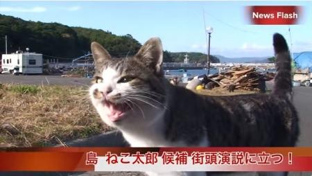 田代島 島ねこ太郎