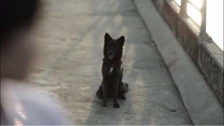 タイ犬01