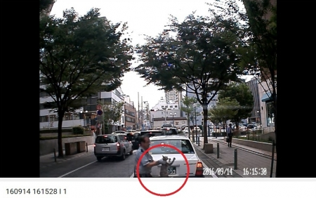 神戸猫01