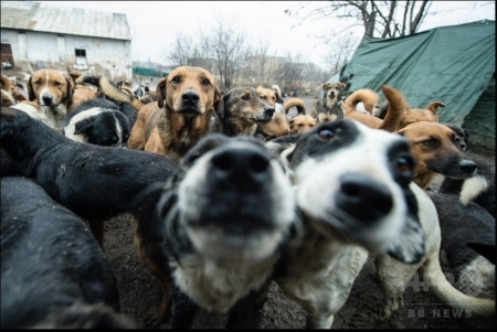 450頭の犬04