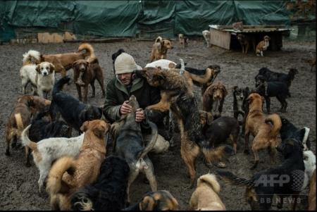 450頭の犬05