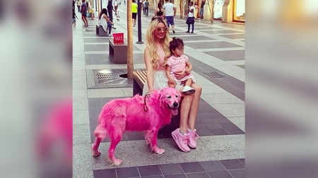pinkdog.jpg