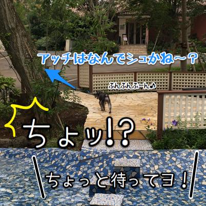 2-IMG_7467.jpg