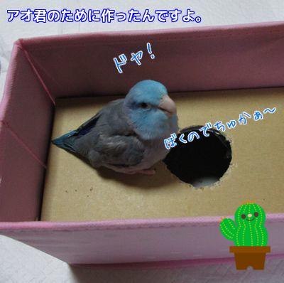 アオ君の箱①