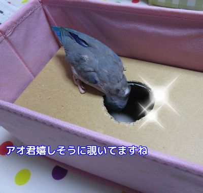 アオ君の箱②