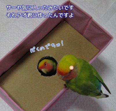 アオ君の箱④