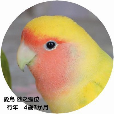愛鳥陸之霊位