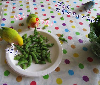 レタスよりお豆②