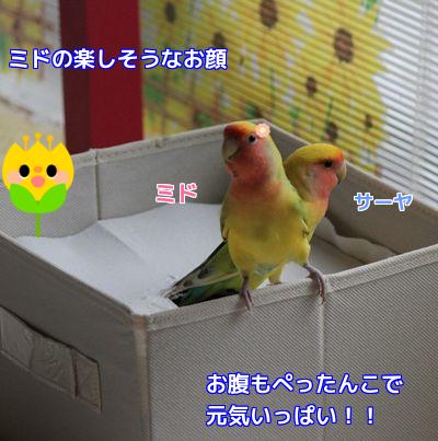 ミドの箱②