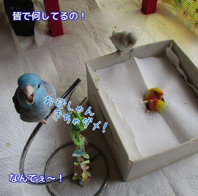 鳥の遊び場①