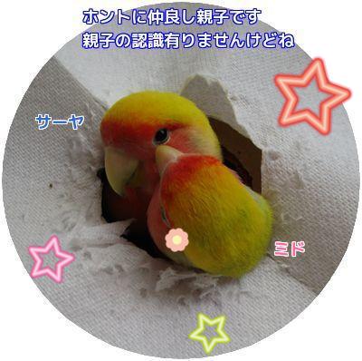 鳥の遊び場②