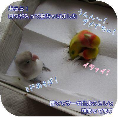 鳥の遊び場③