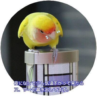 鳥の遊び場④