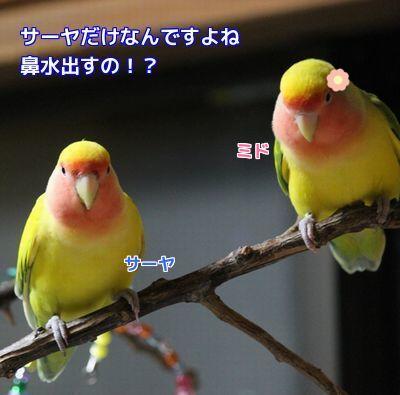 鳥の遊び場⑤