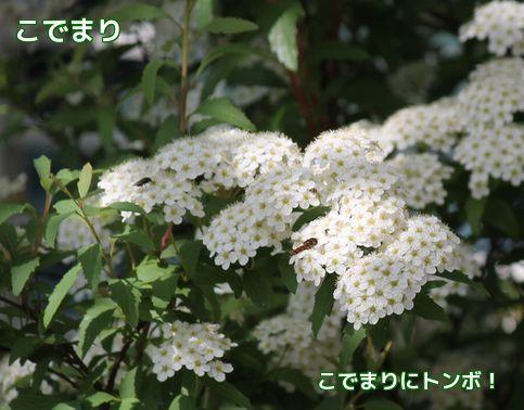 今日の花②