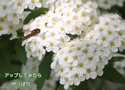 今日の花③