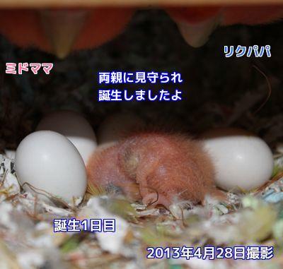 コロちゃん誕生日②