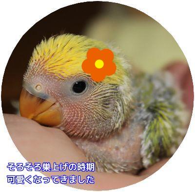コロちゃん誕生日③