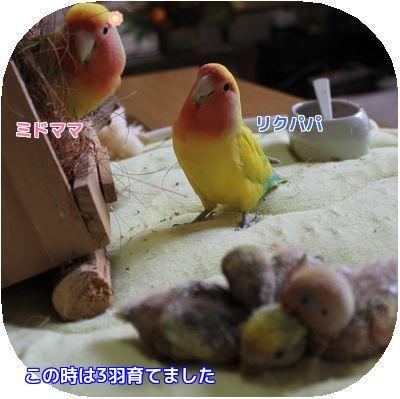 コロちゃん誕生日④