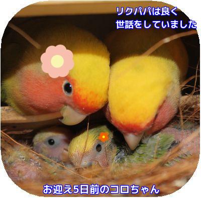 コロちゃん誕生日⑤