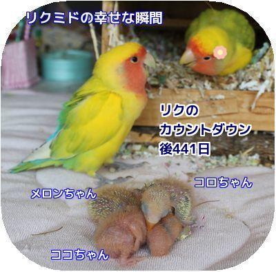 里子の誕生日④